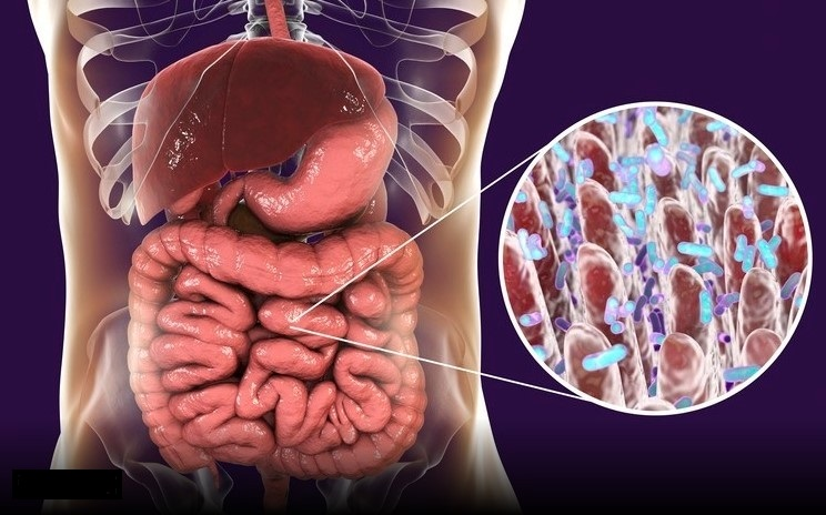 Maintaining a Healthy Gut Microbiome May Help You Fight COVID-19 & Other Infectious Diseases